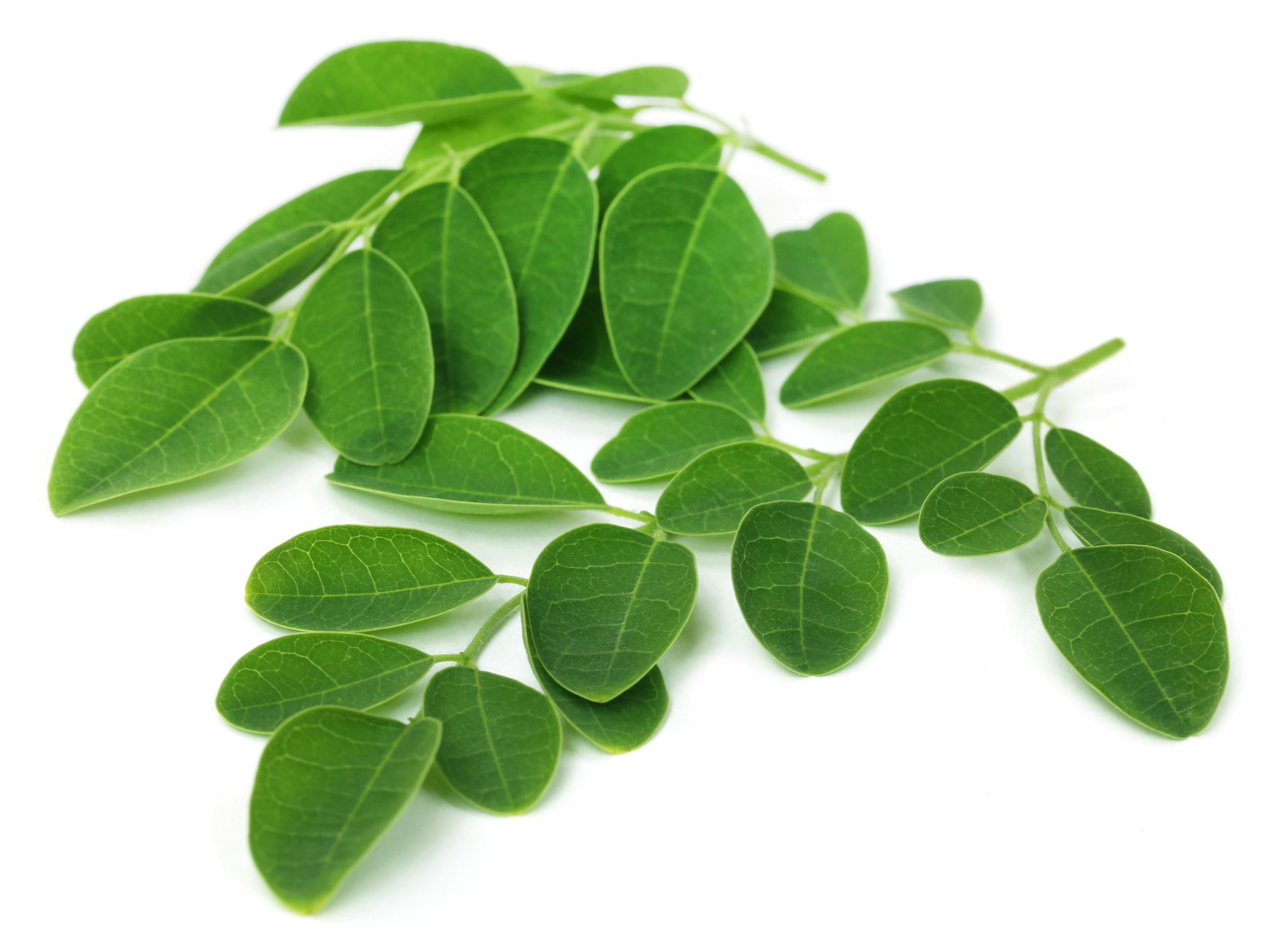 Taste Nature Moringa Leaf